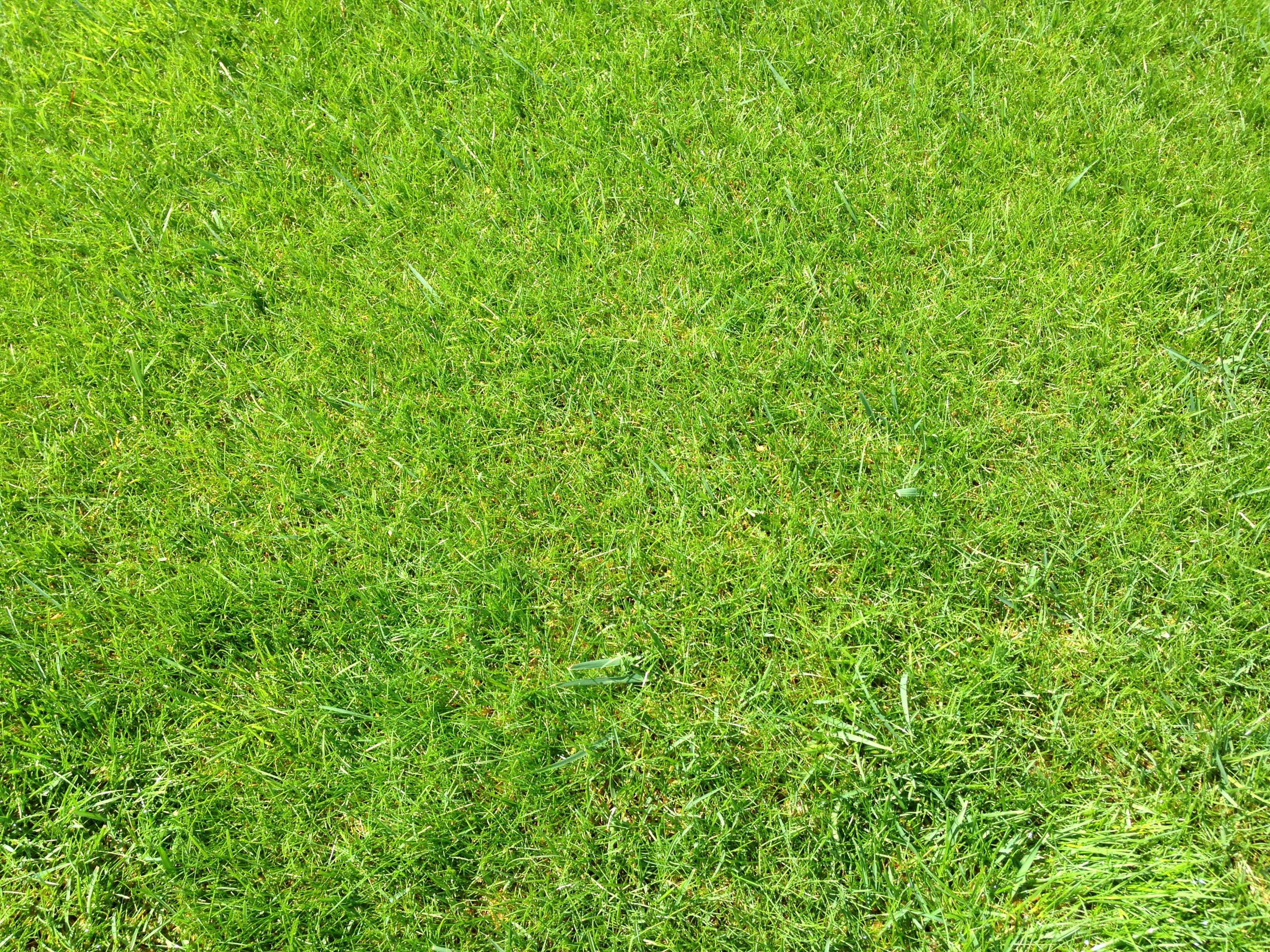 Promociones cesped en tepe natural - Como plantar cesped en el jardin ...